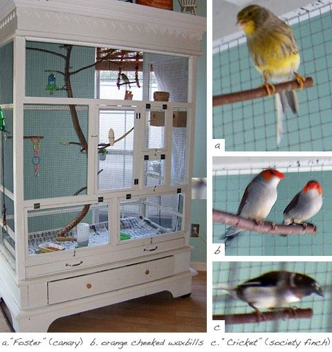 giddyupcycled-aviary