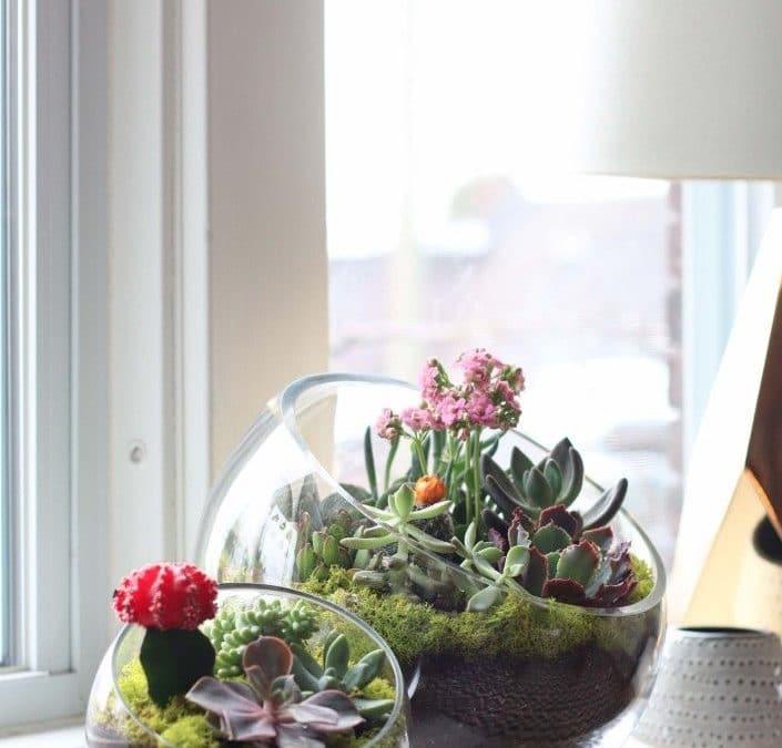 Five Amazing DIY Succulent Planters