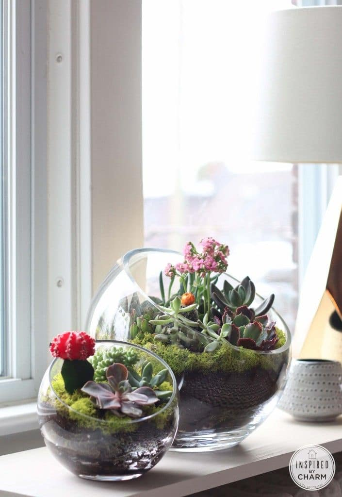 Five Amazing DIY Succulent Planters